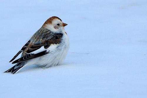 cold_bird